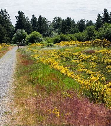 Hiking trails with wild flowers
